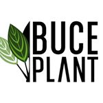 Buce Plant coupons and promo codes